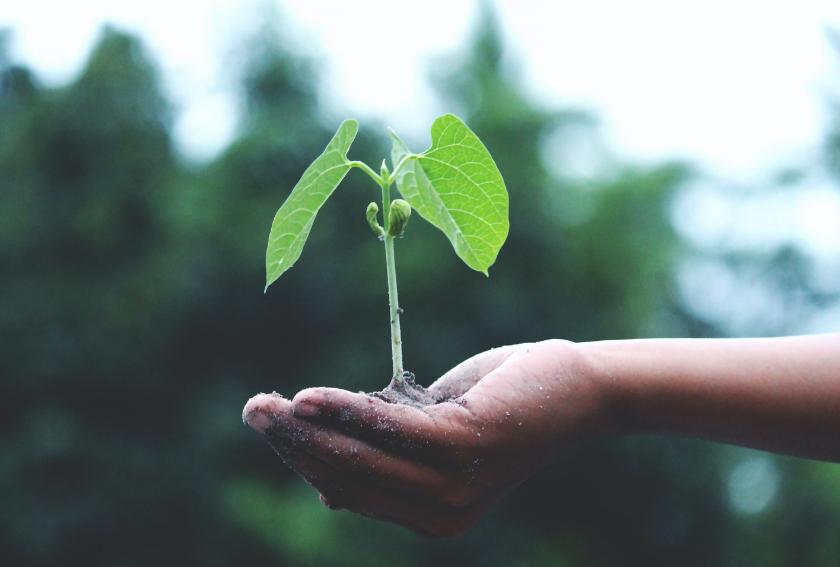 Unser Engagement für Nachhaltigkeit